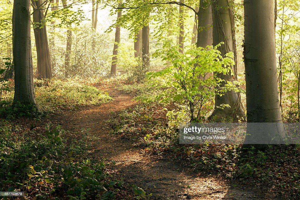 Forest walk : Stock-Foto