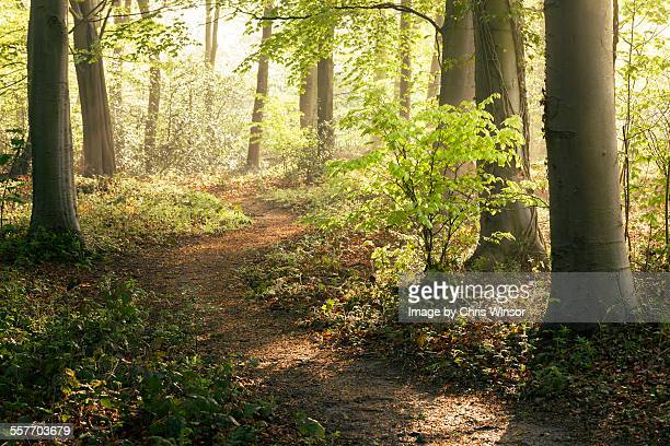 forest walk - woodland stock pictures, royalty-free photos & images