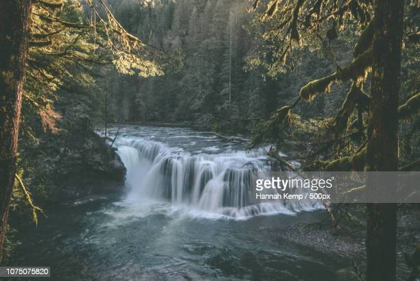 forest waterfall - hannah brooks stock pictures, royalty-free photos & images
