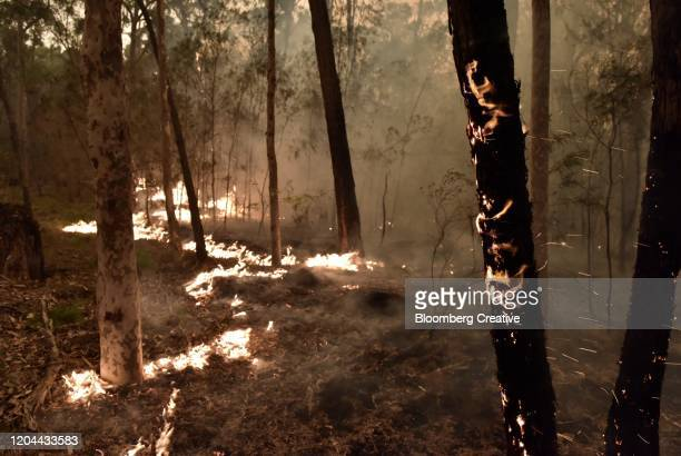 forest wildfires - australia fire stock pictures, royalty-free photos & images