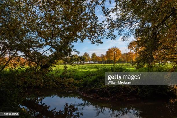 forest window - william mevissen fotografías e imágenes de stock