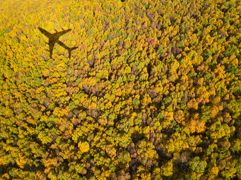 forest with airplane shadow - gettyimageskorea