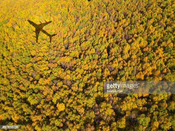 forest with airplane shadow - ombra in primo piano foto e immagini stock