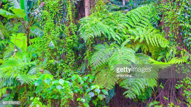 Forest with ferns, Shah Alam, Malaysia