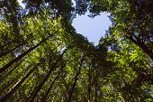 Forest with Heart Shaped Blue Sky