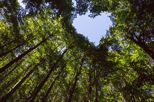 Forest with Heart Shaped Blue Sky 1053405882