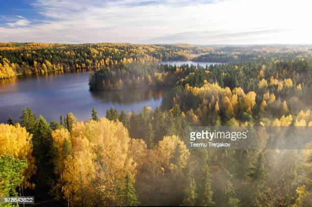Forest with lake in autumn on foggy day, Finland