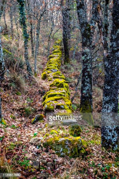 forest with moss on the route la chorrera in hervás , cáceres, extremadura - extremadura stock pictures, royalty-free photos & images