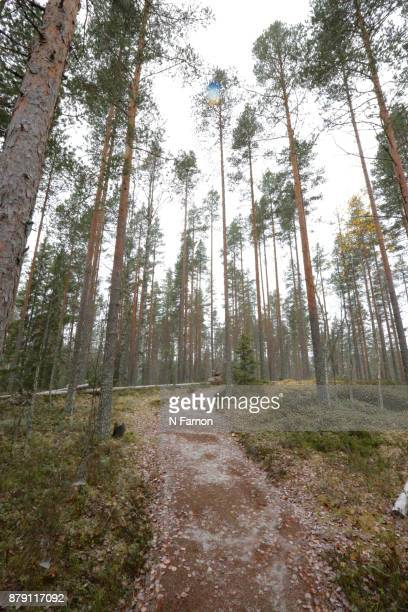forest with pathway in National Park, Finland