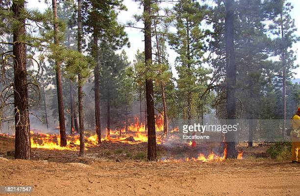 a forest with the blazing fire - california wildfire stock pictures, royalty-free photos & images