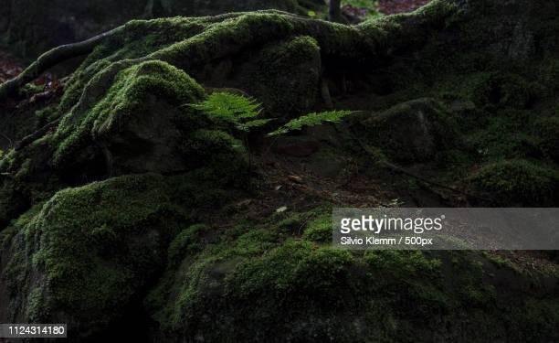forest53 - parte della pianta foto e immagini stock