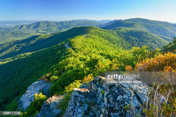 forested hills rolling landscape - skyline drive virginia stock photos and pictures