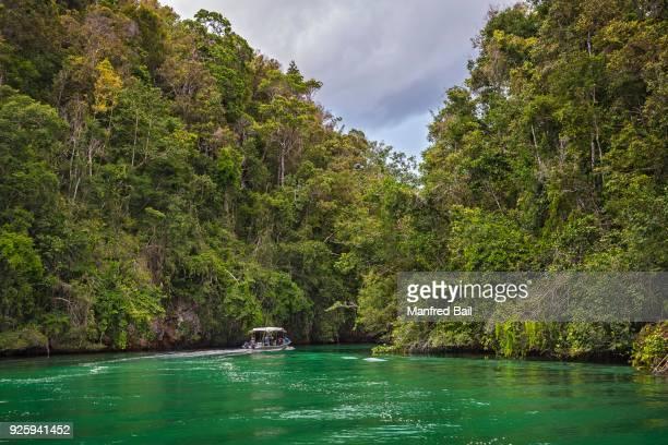 Forested limestone cliffs, Gam, Dampier Strait, Raja Ampat, Western New Guinea, Indonesia