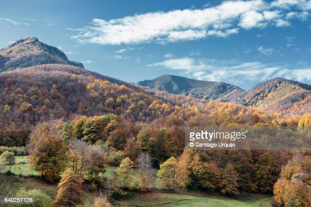 Forested mountains in Redes Natural Park