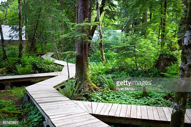 Forested pathway leading to tents.