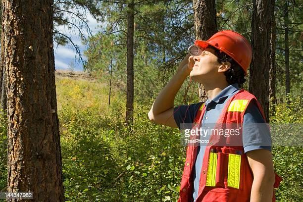 Forester / Arborist