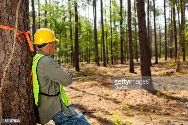 森林作業員または builder マーキングの木とオレンジのリボン。