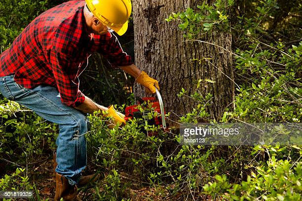 Forester or lumberjack cutting down trees with chainsaw.