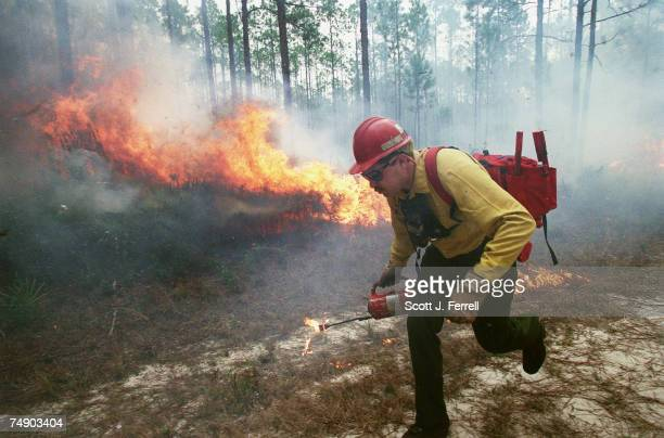 FORESTGreg Zoppetti from the Klamath Basin National Wildlife Refuge in Oregon lights a controlled burn in the Apalachicola National Forest in Florida...