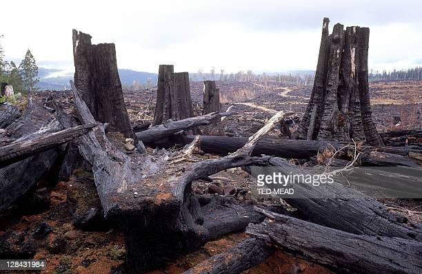 forestry clearfell & burning damage, tasmania, australia