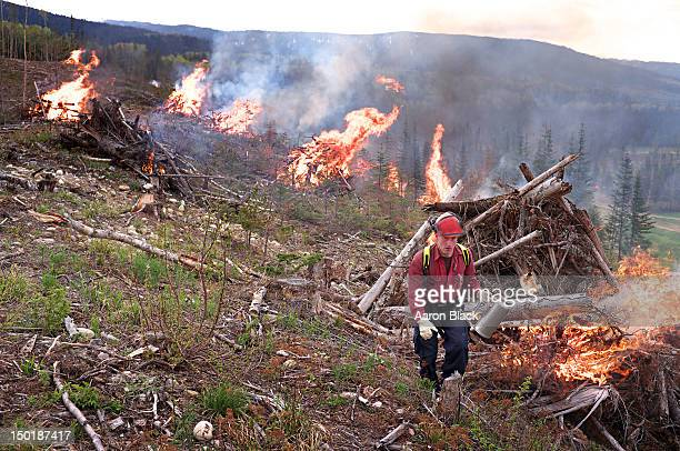 Forestry firefighter lighting large piles of wood