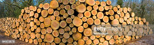 Forestry logging panorama