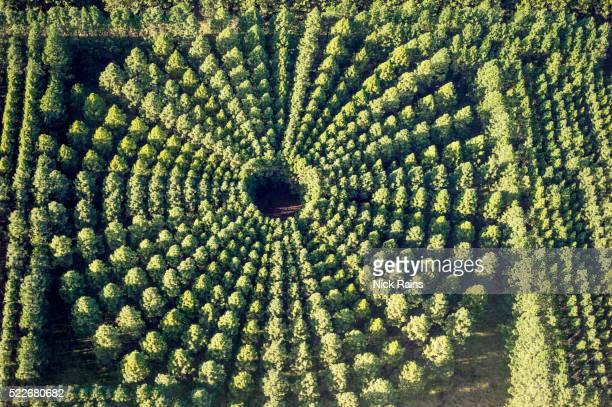 Forestry Plantation Aerials