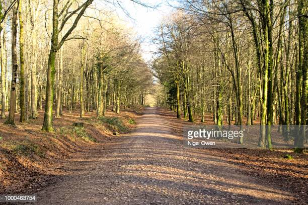 forestry road - nigel owen stock pictures, royalty-free photos & images