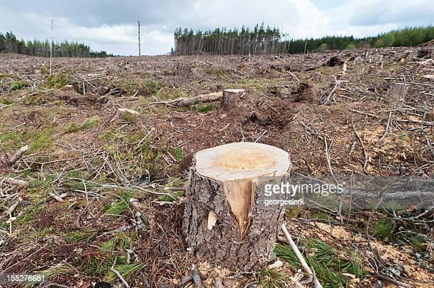 Forestry Scene