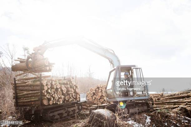 forestry worker sorting logs with heavy machinery - sustainable development goals stock pictures, royalty-free photos & images