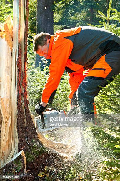 Forestry worker with chainsaw