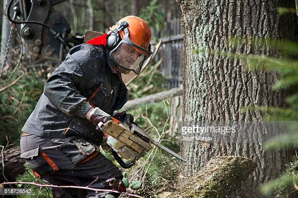 forestry worker with chainsaw - fallen tree stock pictures, royalty-free photos & images