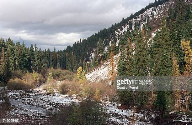 FORESTThe South Fork of the Hood River snakes through Mt Hood National Forest