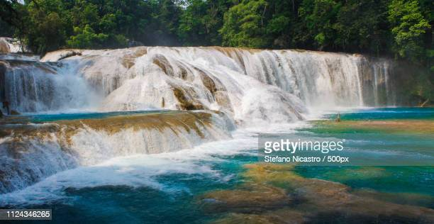 forever - chiapas stock pictures, royalty-free photos & images