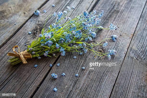 Forget-me-not flowers (Myosotis arvensis)