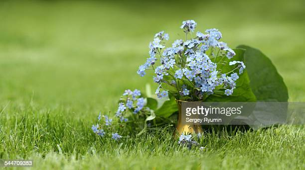 Forget-me-not in a vase