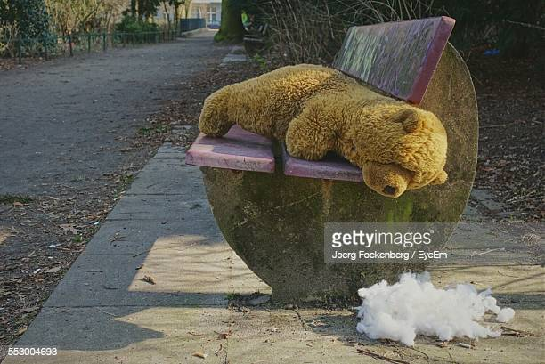 Forgotten Teddy Bear On Bench