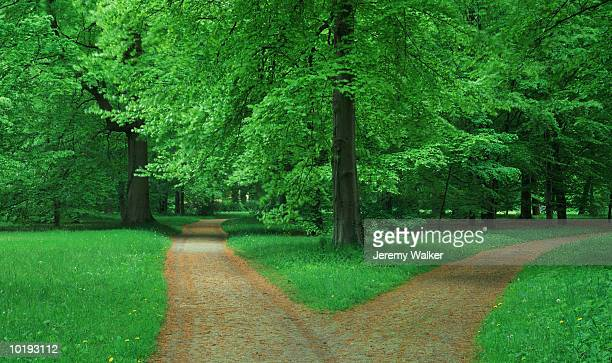 fork in pathway through beech forest - forked road stock pictures, royalty-free photos & images