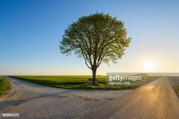 forked road with limetree and morning sun, spring, franconia, bavaria, germany - intersection stock pictures, royalty-free photos & images