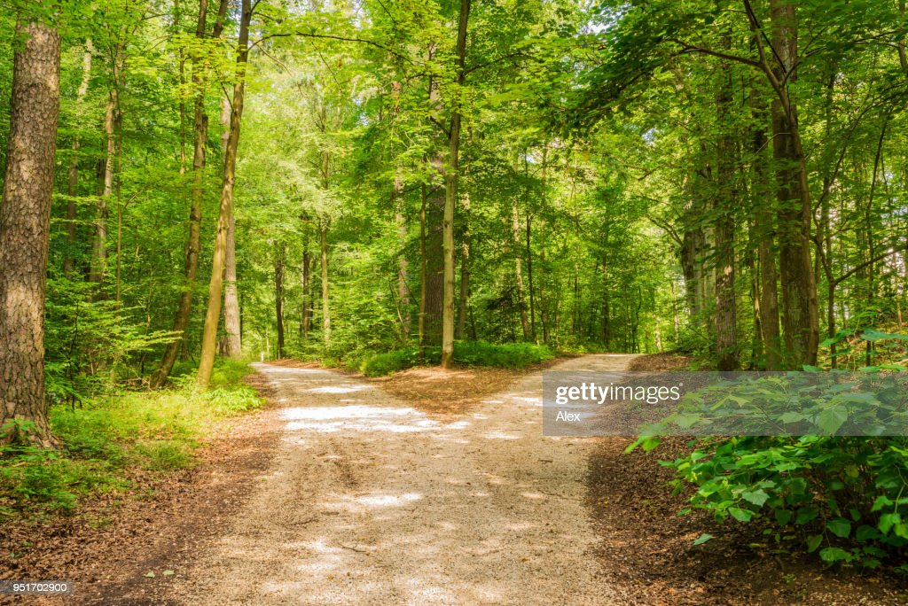 Forked Roads Right And Left In Green Forest Stock Photo