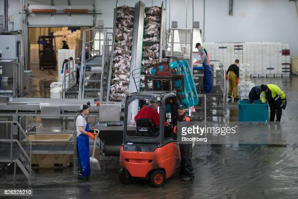 A forklift truck unloads sole as the catch is cleaned and sorted ahead of auction at the port of Den Helder Netherlands on Friday Aug 4 2017 Prime...