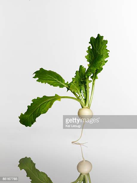 form - turnip stock pictures, royalty-free photos & images