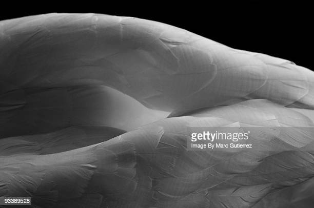 form - feather stock pictures, royalty-free photos & images
