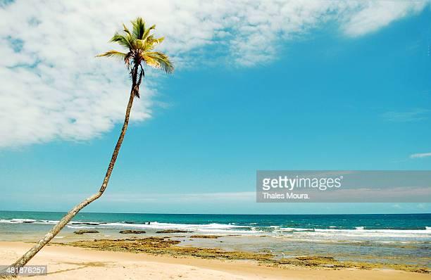 formas de um país tropical li. - moura stock photos and pictures