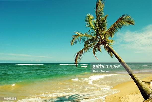 Formas de um país tropical.