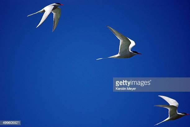 Formation of sea birds