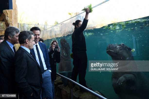 Former French President Nicolas Sarkozy flanked by French rightwing Les Republicains MP Guillaume Peltier looks at an hippopotamus while it is fed...