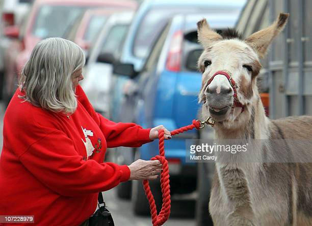 Former Home Office Minister Ann Widdecombe leads Teasel the donkey for a photocall at the launch of the Christmas campaign to save donkeys in the...
