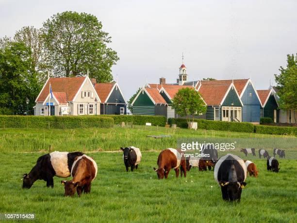 former island of schokland (unesco world heritage), the netherlands - flevoland stockfoto's en -beelden