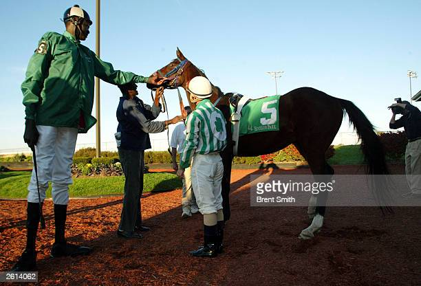 Former NBA star Manute Bol reaches out to touch Alpena Magic a twoyearold thoroughbred at Hoosier Park October 18 2003 in Anderson Indiana Bol who...